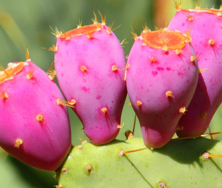 Why slathering cactus oil on your face makes you glow more!