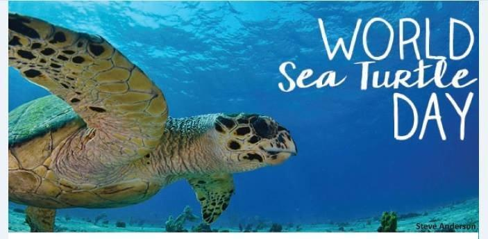 World Sea Turtle Day 2018