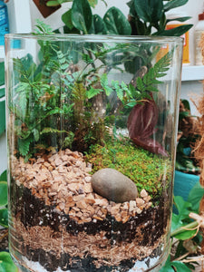 Private Terrarium Class 2/28 @The Plant Shack - VintageChameleon