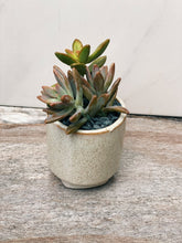 Load image into Gallery viewer, Mini Succulent Garden - VintageChameleon