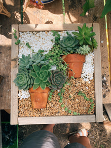 NOW VIRTUAL Succulent Box Planter 3/25  @ Prima Oliva - VintageChameleon