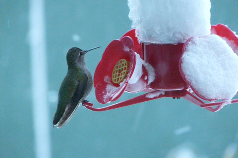 Best Ways To Attract And Feed Winter Hummingbirds