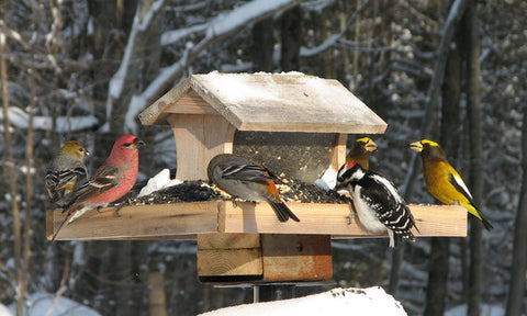 Providing Winter Visitors with a nice choice of bird food is very important.