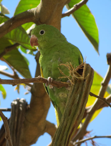 green parrot in a tree