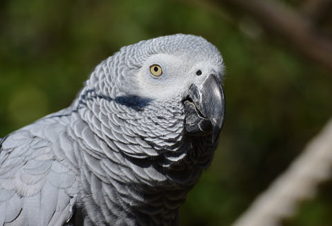 African Grey are capable of cool intelligent reasoning.