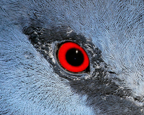 extreme close up of a bird's eye