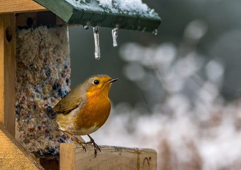 Welcome the new birds that have migrated to your yard this winter.