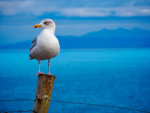 seagull perched on a fence post