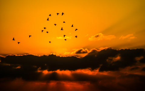 group of birds flying during sunset