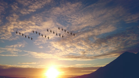 birds flying in synchronization during sunset