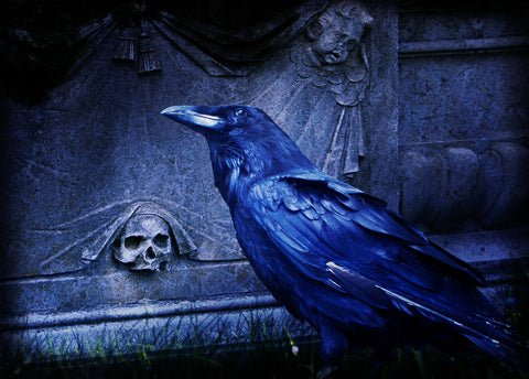 a raven next to a gravestone