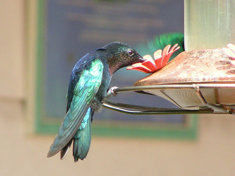 Hummingbird at a bird feeder