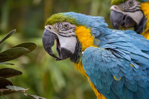 Macaws are one of the most affectionate birds.