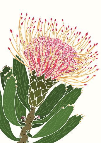 White Pin Cushion Protea A3 Print