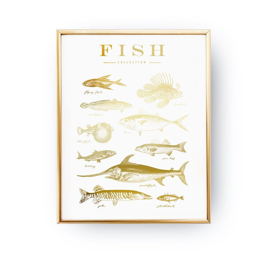 Fish Collection, Poster