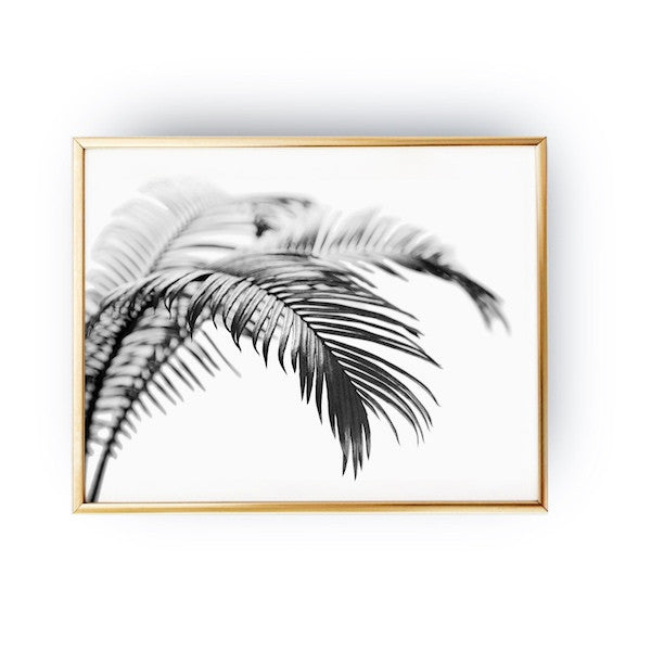 Palm Tree Black, Poster