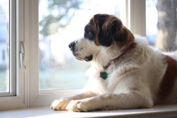 Does Your Dog Really Miss You When You're Gone?