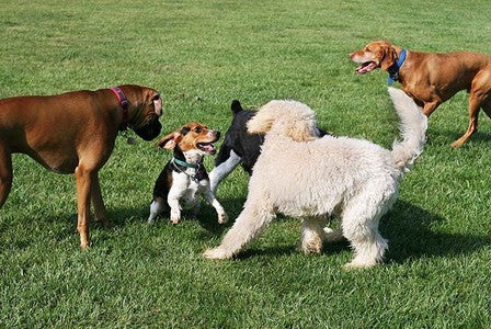 Why Socialization is Important For Your Dog