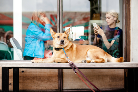 Apps Every Dog Owner Should Have