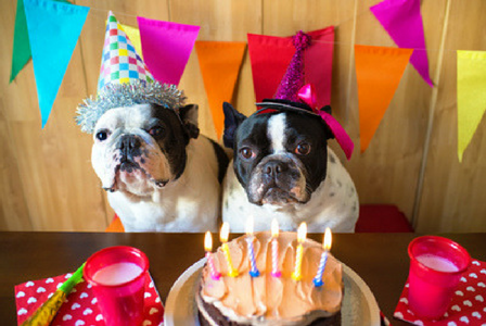 How to Throw an Epic Dog Birthday Party