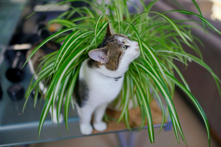 Low Maintenance Pet Friendly House Plants
