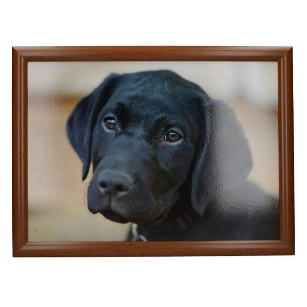 5233654 Creative Tops Black Labrador Laptray - Front