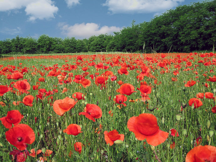 Cotswolds (Poppy Appeal): July 11th