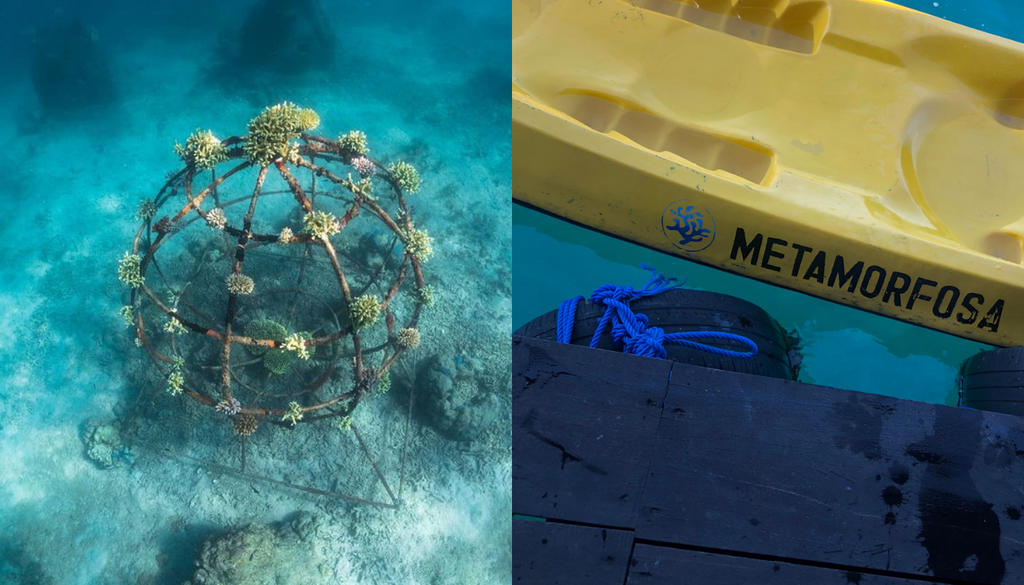 Coral reef restoration project Metamorfosa in Sumberkima, Bali. Work to restore the reef and life in the bay with help from the population.