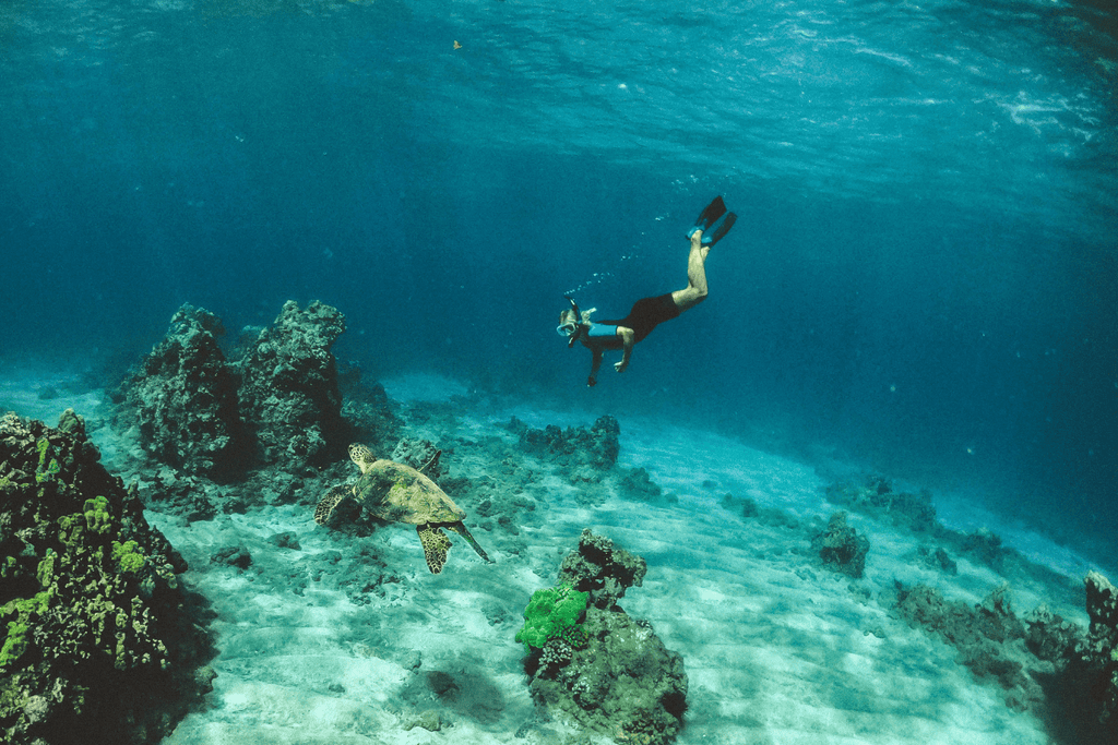 Freediver, diving with a sea turtle.