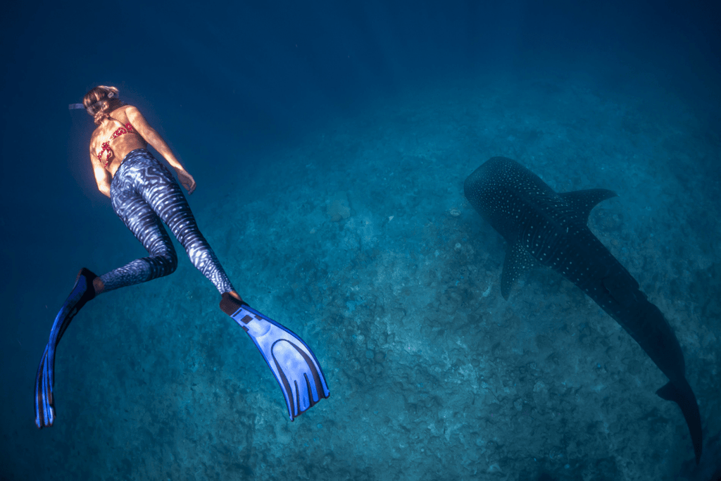 Freediving in the ocean wearing fins, mask and snorkel. Practicing to hold their breath while surrounded by beautiful coral reefs and ocean. Seeing a whale shark while freediving.