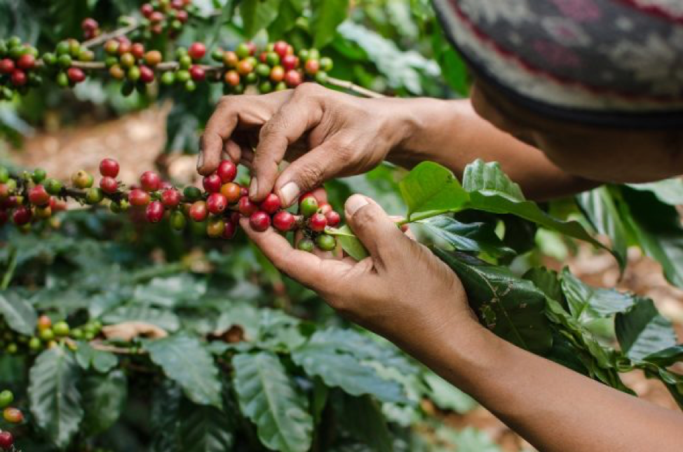 Triple Focus | Coffee, Climate and Sustainability