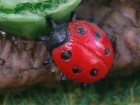 Ladybird-Dollshouse Hampshire