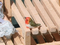 Little Robin-Dollshouse Hampshire