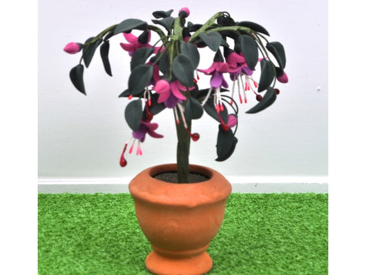 Standard Fuchsia-Dollshouse Hampshire