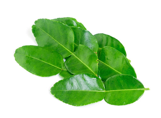 Kaffir Lime Fresh Leaves Import Indonesia Bag 100grams