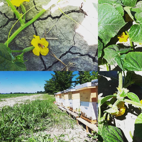 BLB Honey Pollination Services Southwestern Ontario