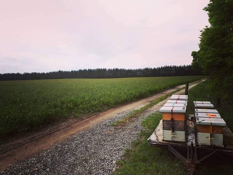 BLB Honey Crop Pollination Services Southwestern Ontario