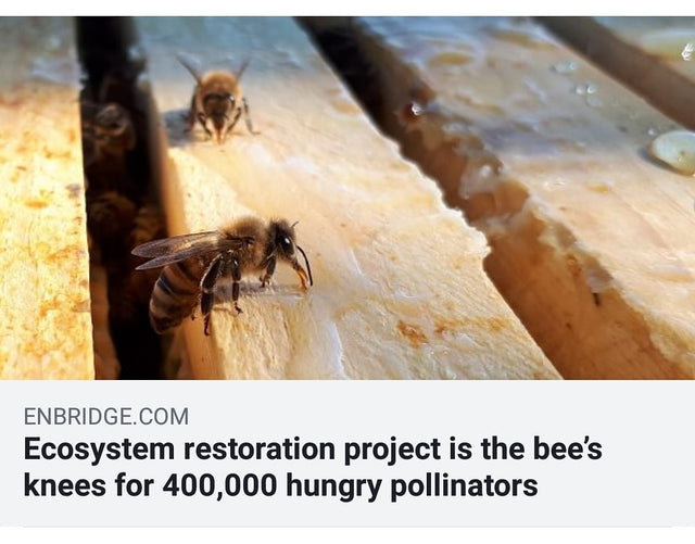 Ecosystem Restoration Project is the Bee's Knees for 400, 000 Hungry Pollinators