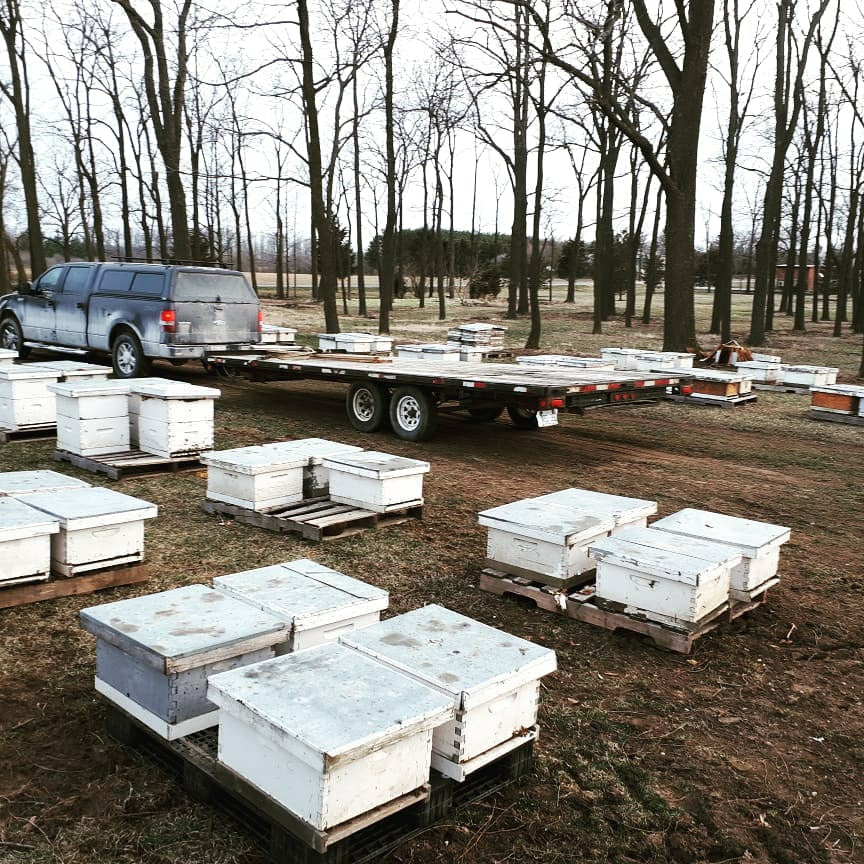 Single Brood Hive for pick up July 11th, 2020