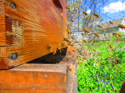 Single Brood Hive for pick up June 13th, 2020