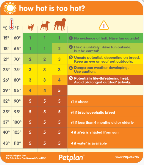 hot weather dangers dogs