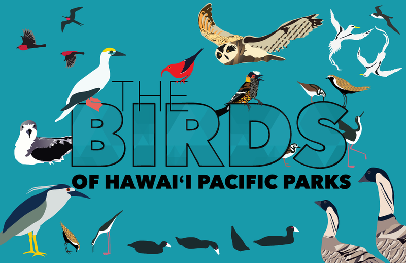 Birds of Hawaiʻi Pacific Parks