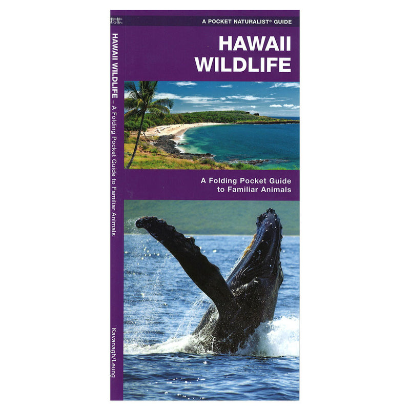 This beautifully illustrated triple fold guide highlights over 140 familiar species of birds, mammals, reptiles, amphibians, butterflies and seashore life and includes a map featuring prominent state-wide wildlife sanctuaries. Humpback whale on the cover.