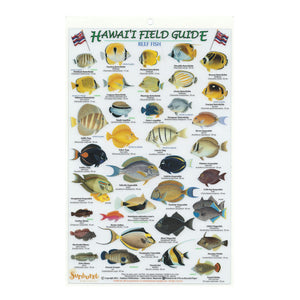 Image is of front of fish card with artistic depictions of about 40 Hawaiʻi reef fish.