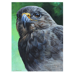 A Hawaiian hawk, or ʻio, gazes out from this art print by the artist John Dawson.
