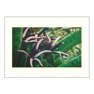 Notecard Set: Rare Hawaiian Birds and Plants
