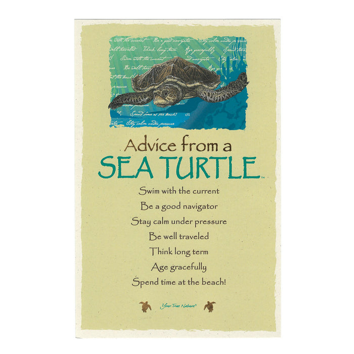 Postcard: Advice from a Sea Turtle