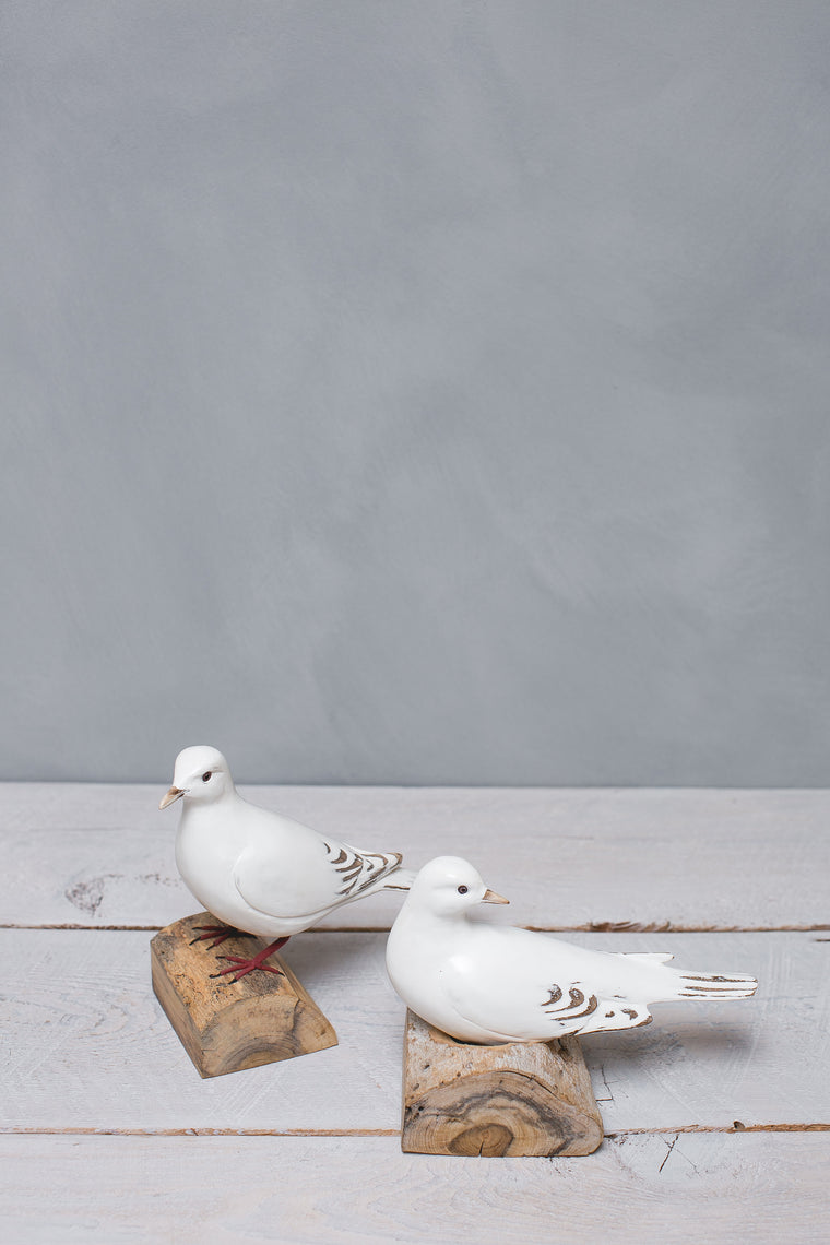 White Dove Pair