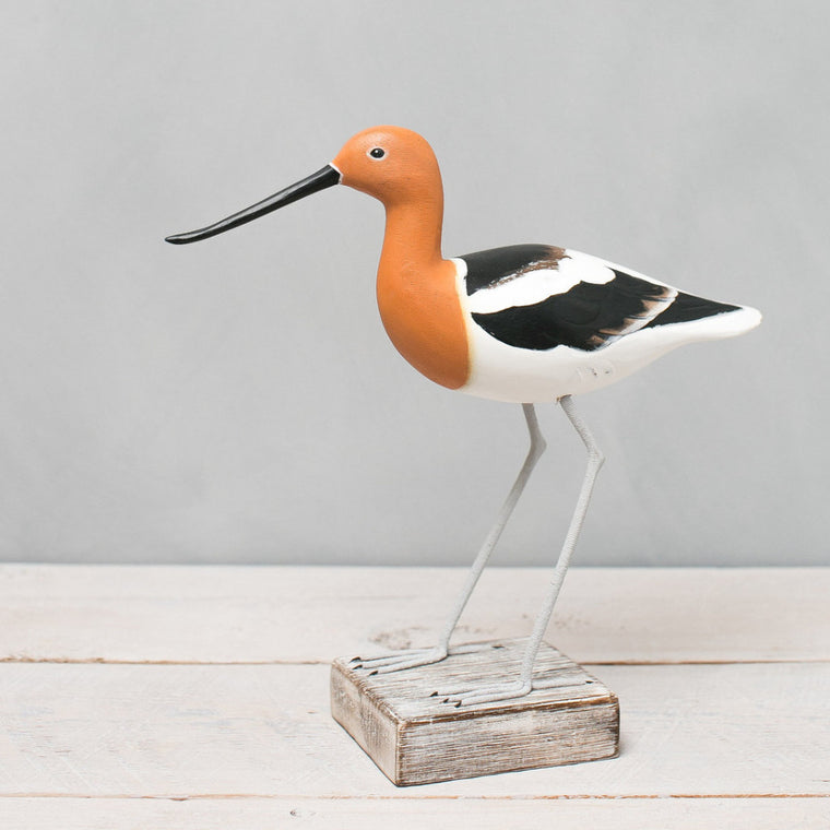 American Avocet Summer  Plumage