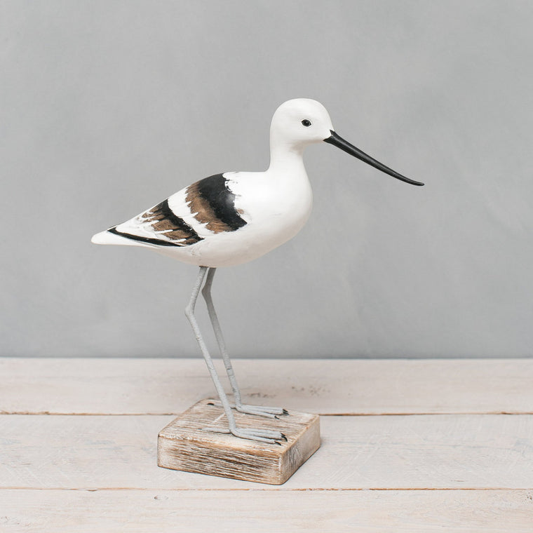 American Avocet_Winter Plumage